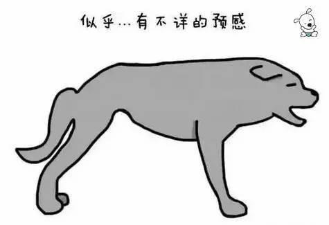 2318a6e03256098faf79d6a62c21718d - 狗狗的尾巴会说话,这你知道吗?