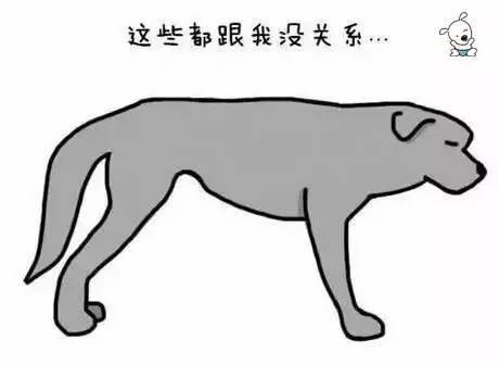 3faf355abecb7c287c927884ec516a00 - 狗狗的尾巴会说话,这你知道吗?