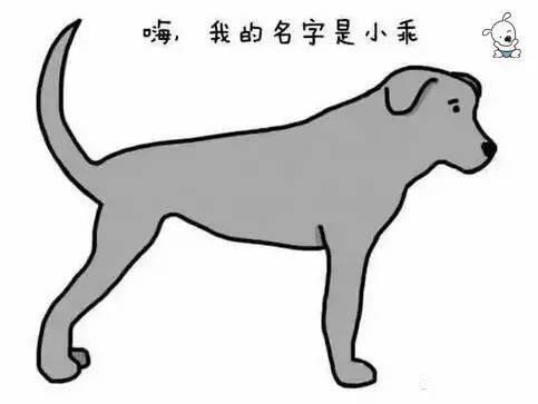 49aa38881b386e104e0303f3231e6ac0 - 狗狗的尾巴会说话,这你知道吗?