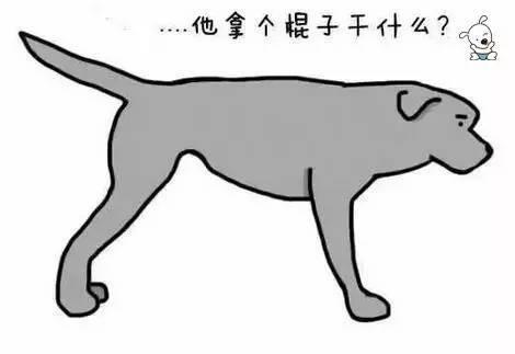 76c881db6eefe04ccc921350fbe7f9bd - 狗狗的尾巴会说话,这你知道吗?