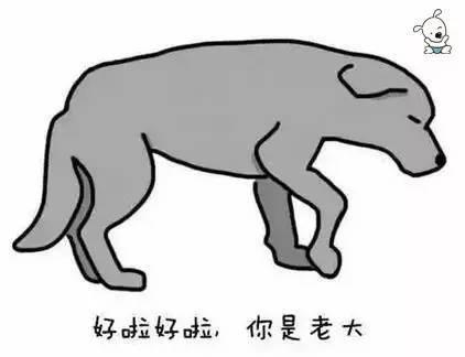 cf001e46f2ec55e2f6cfd4ec6d26df8a - 狗狗的尾巴会说话,这你知道吗?