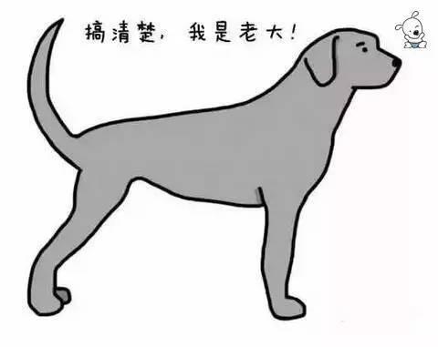 f48428b1c68e9a3cd7856d33904d4100 - 狗狗的尾巴会说话,这你知道吗?