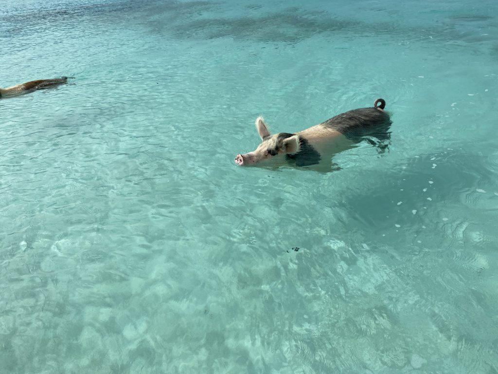 巴哈马五天四夜 —— 拿骚、亚特兰蒂斯、猪猪岛群休闲游总结插图(3)