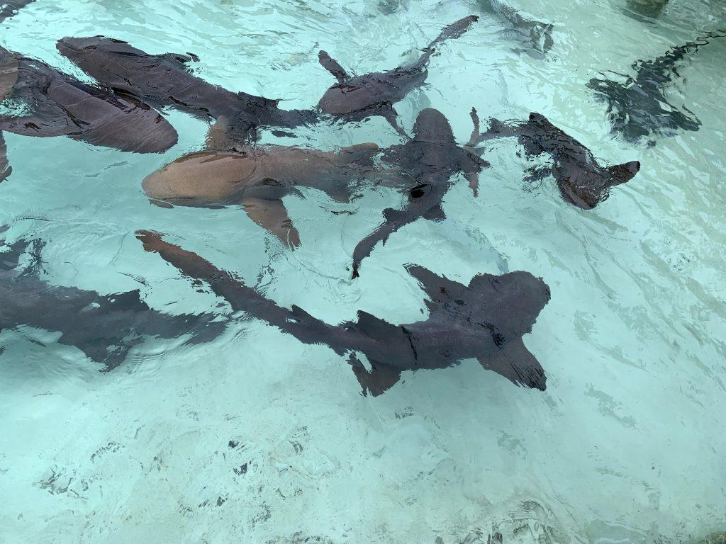 巴哈马五天四夜 —— 拿骚、亚特兰蒂斯、猪猪岛群休闲游总结插图(4)